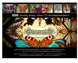 BBC 自然世界:翩翩蝴蝶——英国式迷恋