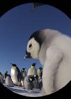 帝企鹅宝宝的生命轮回之旅