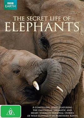 大象的秘密生活 BT/迅雷下载